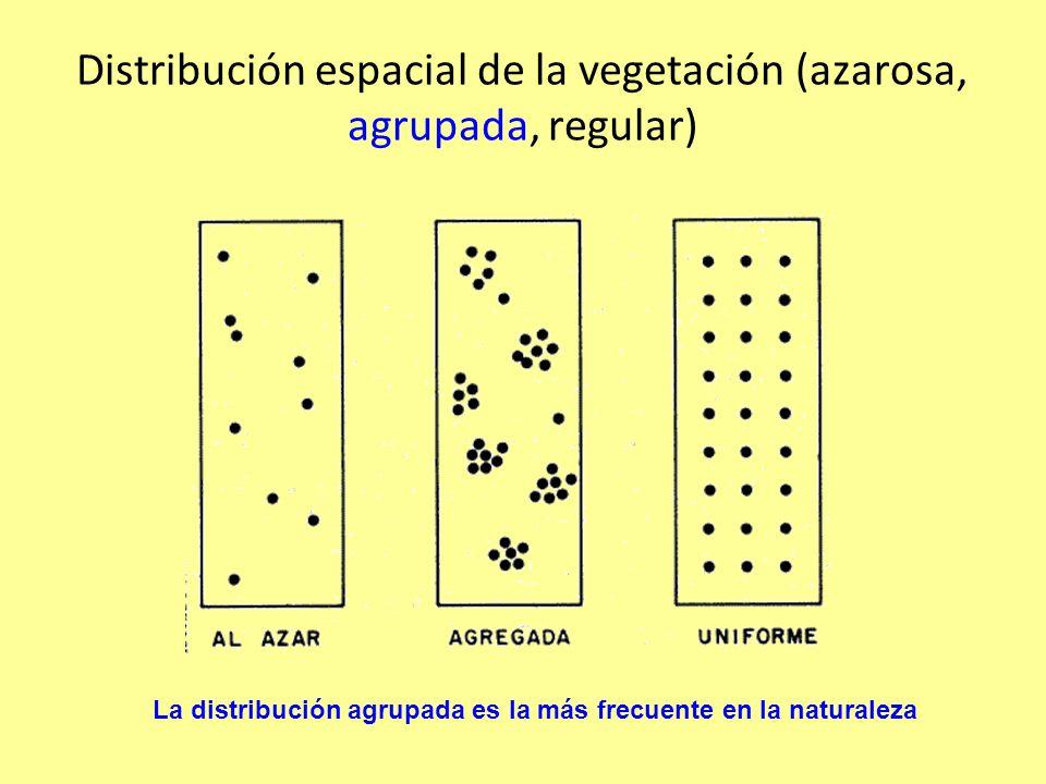 Distribución espacial de la vegetación (azarosa, agrupada, regular)