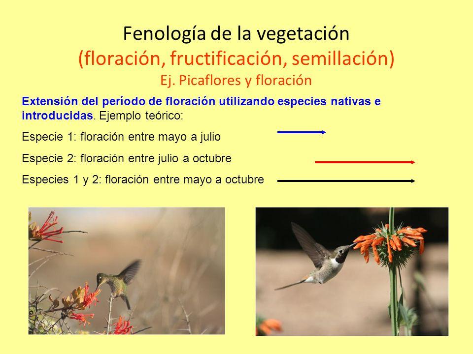 Fenología de la vegetación (floración, fructificación, semillación) Ej