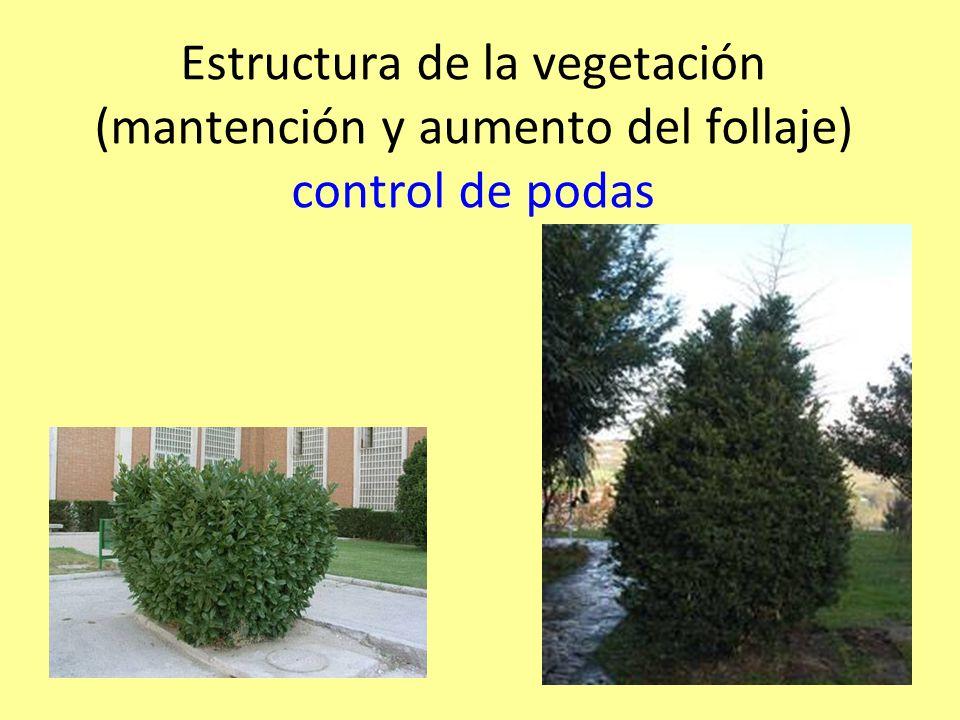 Estructura de la vegetación (mantención y aumento del follaje) control de podas