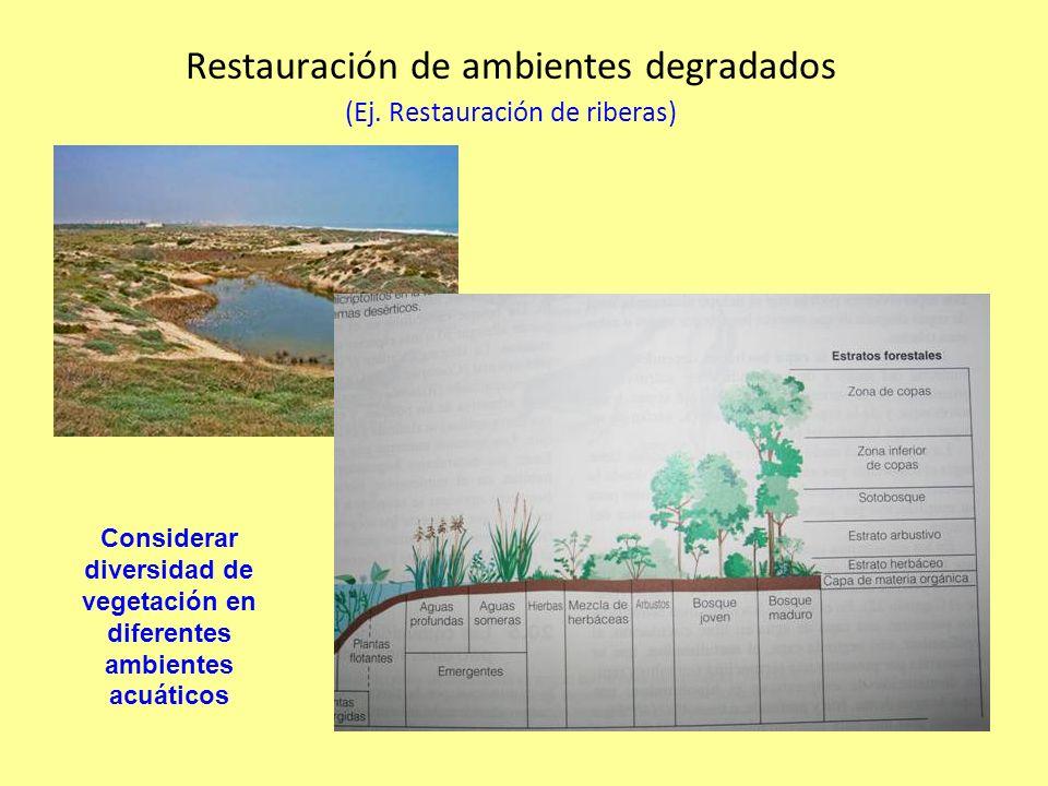 Restauración de ambientes degradados (Ej. Restauración de riberas)