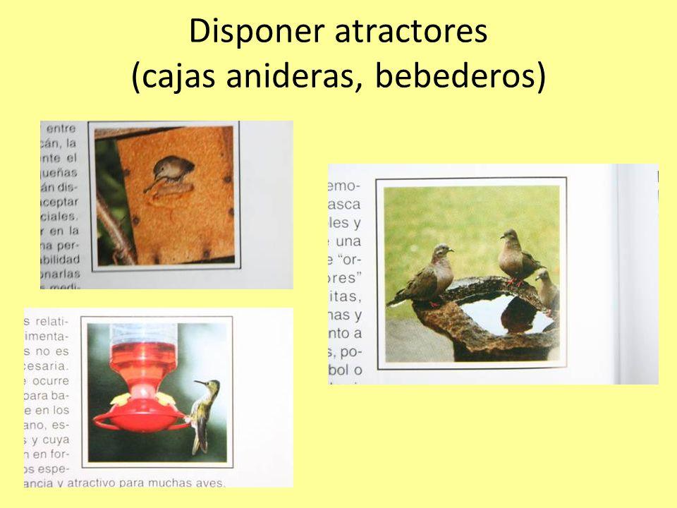 Disponer atractores (cajas anideras, bebederos)