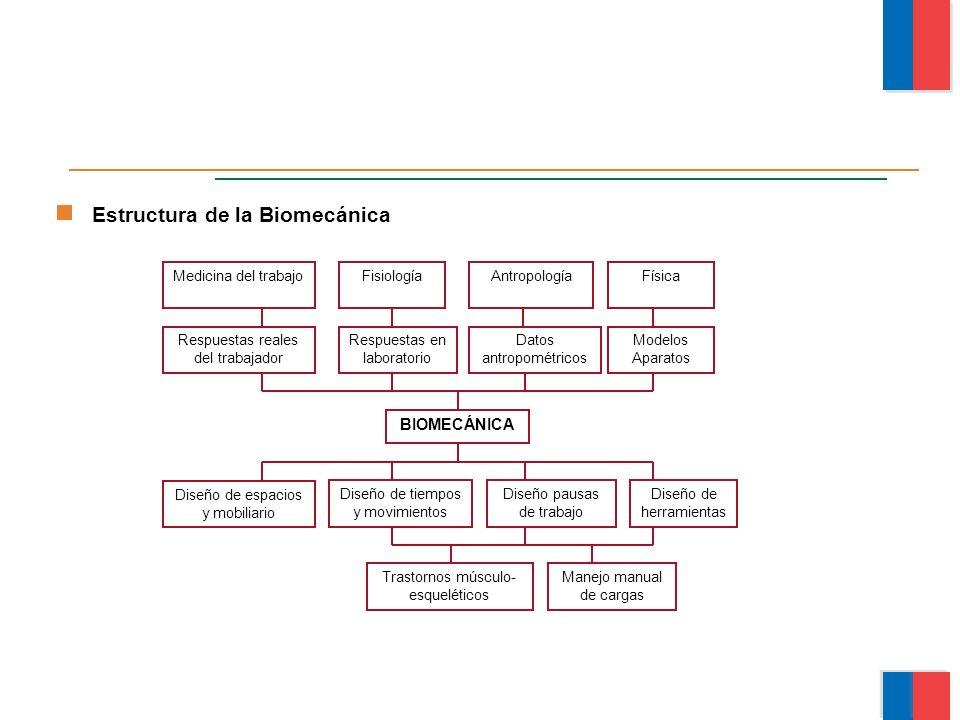 Estructura de la Biomecánica