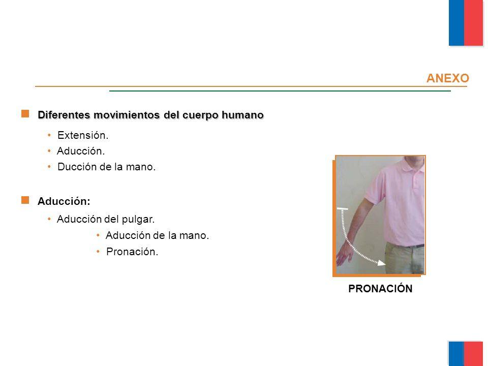 ANEXO Diferentes movimientos del cuerpo humano Extensión. Aducción.