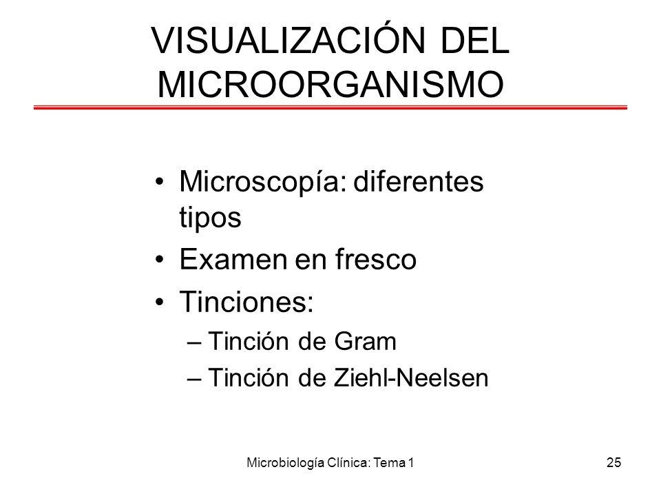 VISUALIZACIÓN DEL MICROORGANISMO