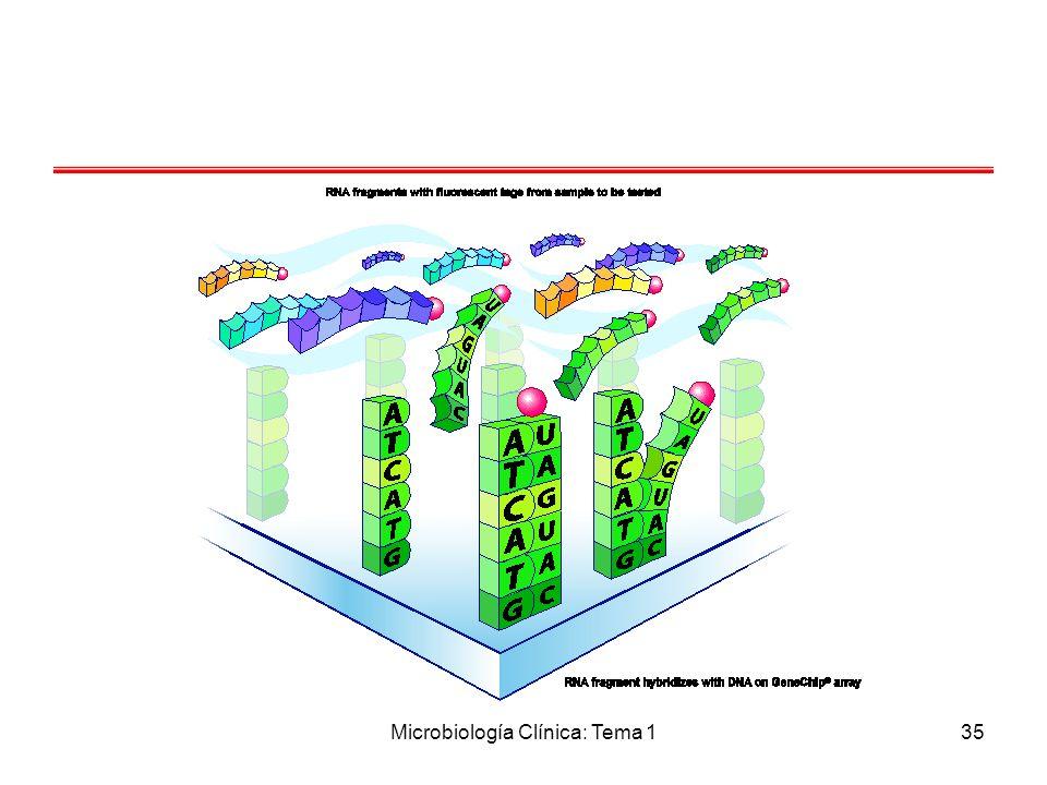 Microbiología Clínica: Tema 1
