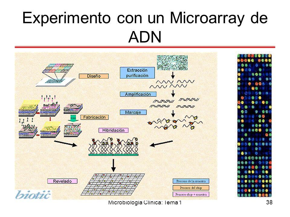 Experimento con un Microarray de ADN