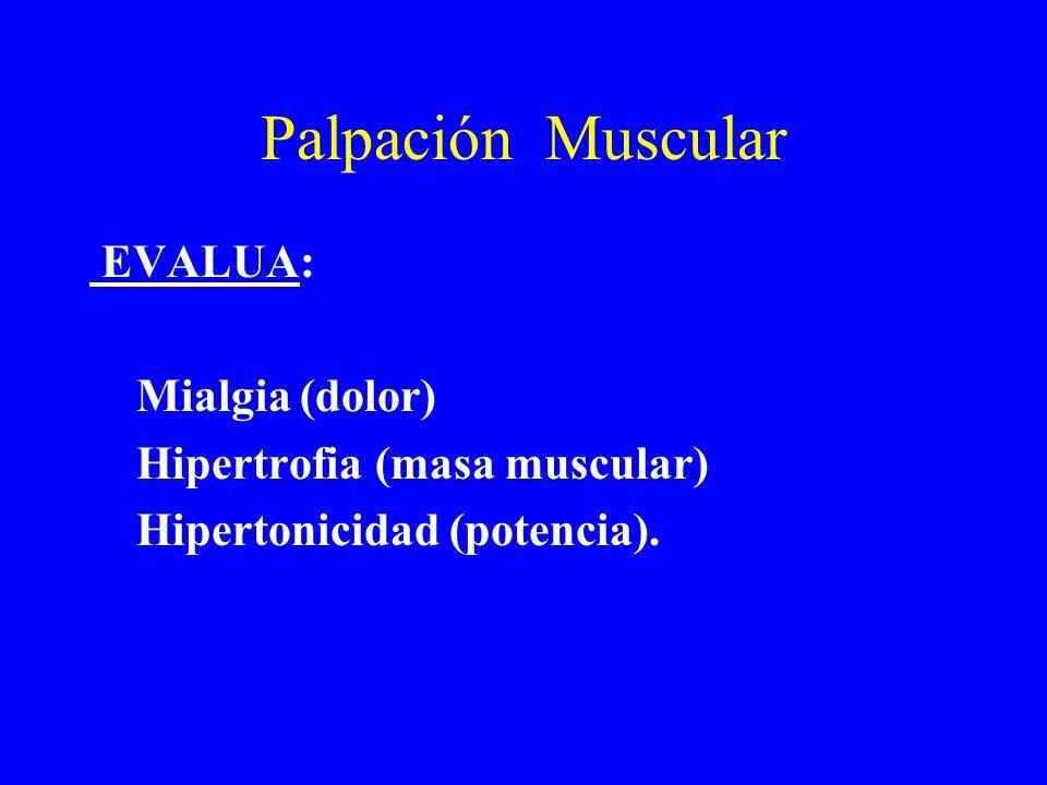 Palpación Muscular EVALUA: Mialgia (dolor) Hipertrofia (masa muscular)