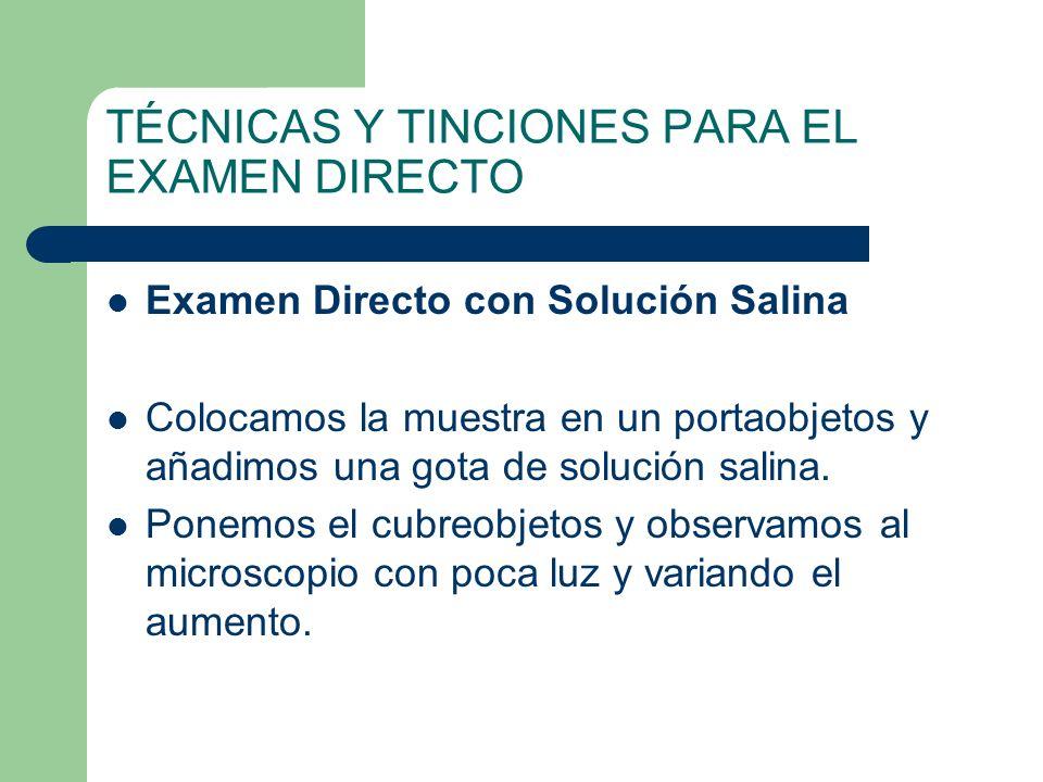 TÉCNICAS Y TINCIONES PARA EL EXAMEN DIRECTO