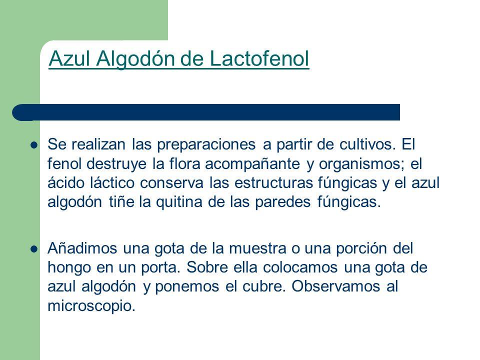 Azul Algodón de Lactofenol