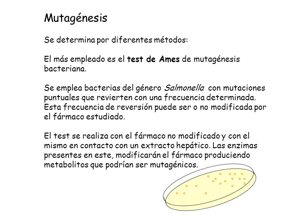 Mutagénesis Se determina por diferentes métodos: