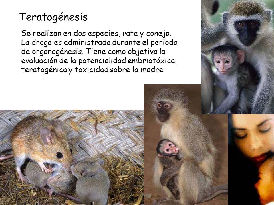 Teratogénesis Se realizan en dos especies, rata y conejo.
