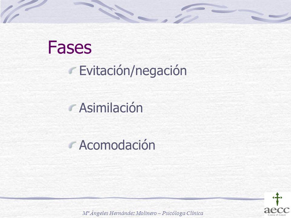 Fases Evitación/negación Asimilación Acomodación