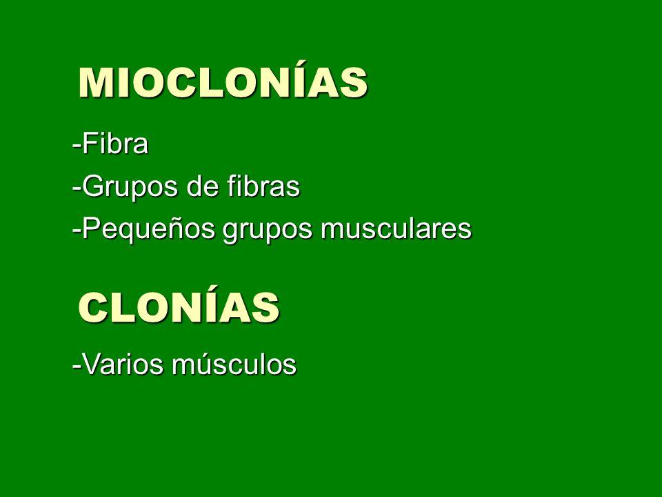 -Fibra -Grupos de fibras -Pequeños grupos musculares