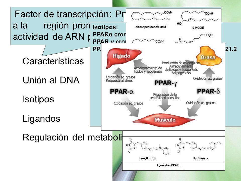 PPAR Características Unión al DNA Isotipos Ligandos
