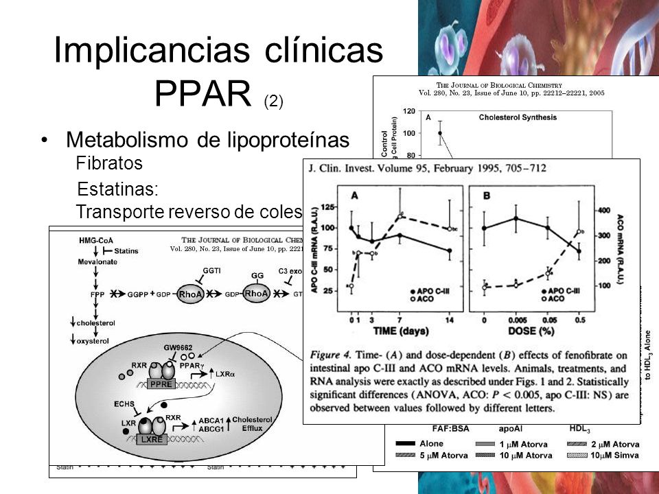 Implicancias clínicas PPAR (2)