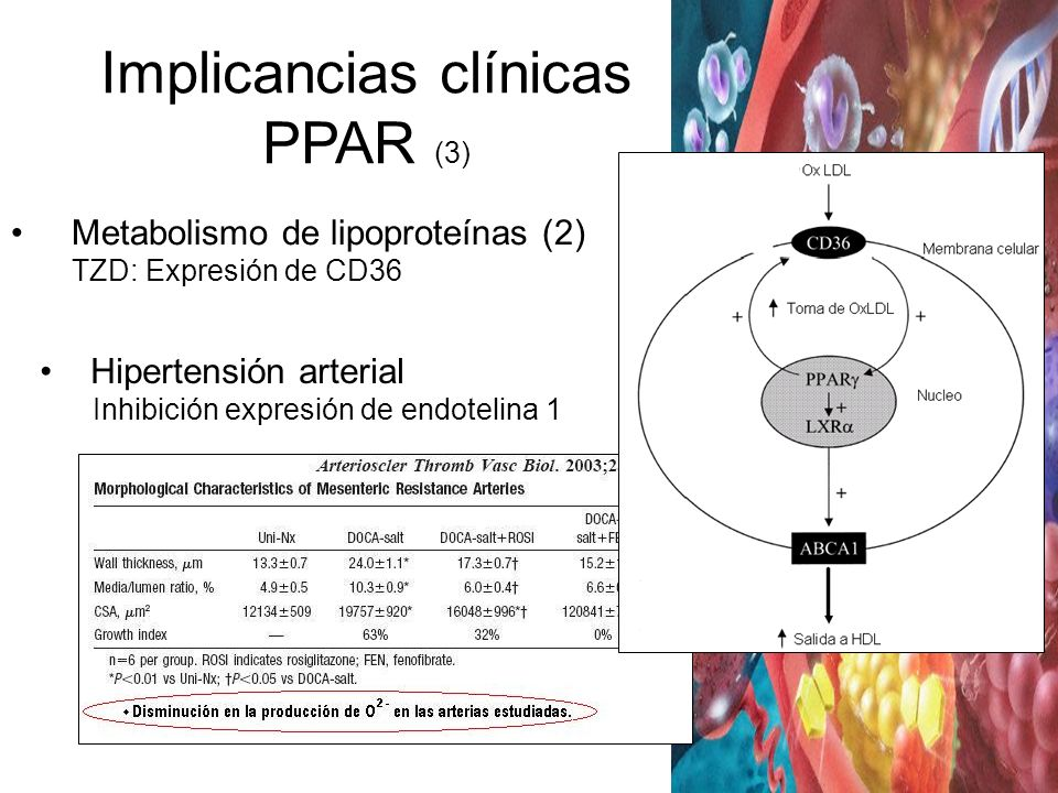 Implicancias clínicas PPAR (3)
