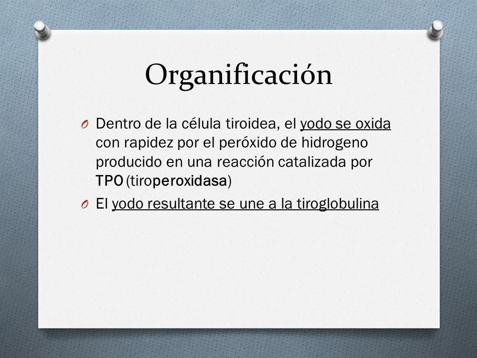 Organificación