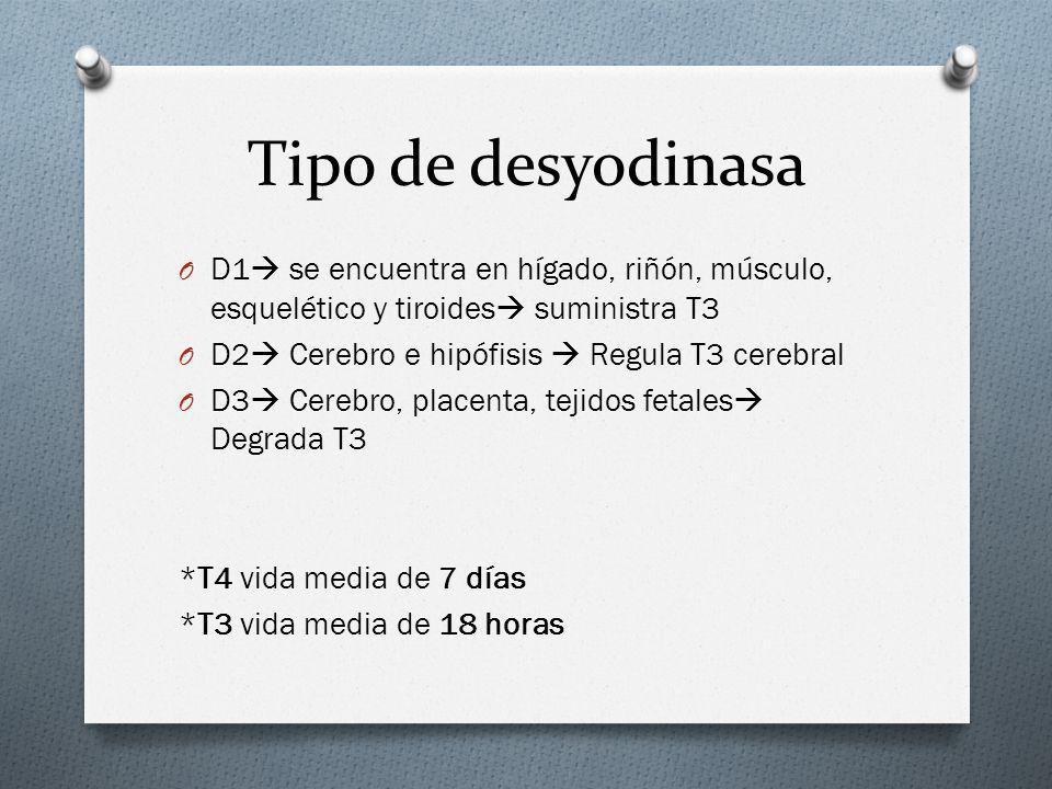 Tipo de desyodinasa D1 se encuentra en hígado, riñón, músculo, esquelético y tiroides suministra T3.