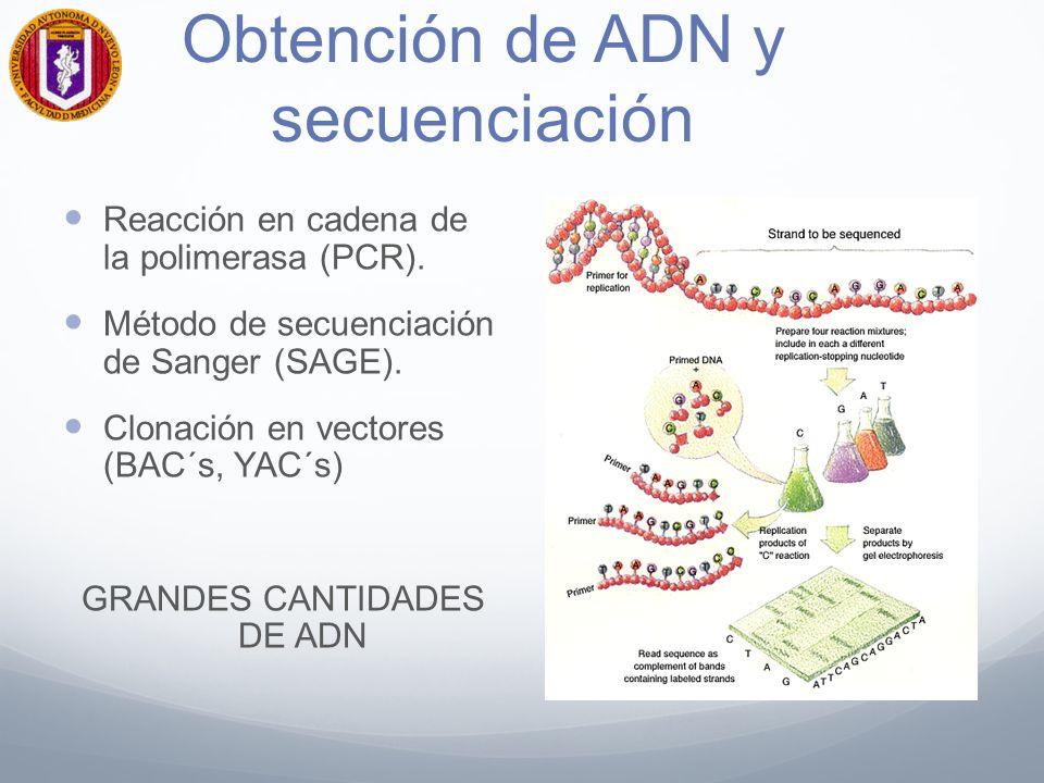 Obtención de ADN y secuenciación