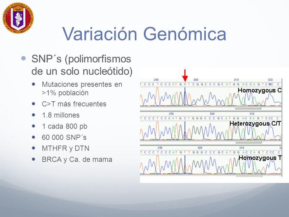 Variación Genómica SNP´s (polimorfismos de un solo nucleótido)