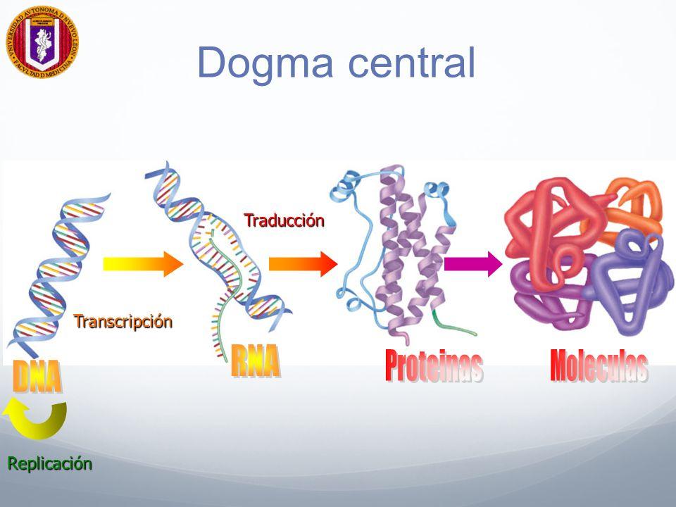 Dogma central Moleculas RNA Proteinas DNA Traducción Transcripción