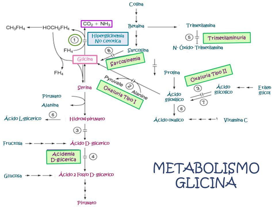METABOLISMO GLICINA Trimetilaminuria Sarcosinemia Oxaluria Tipo II