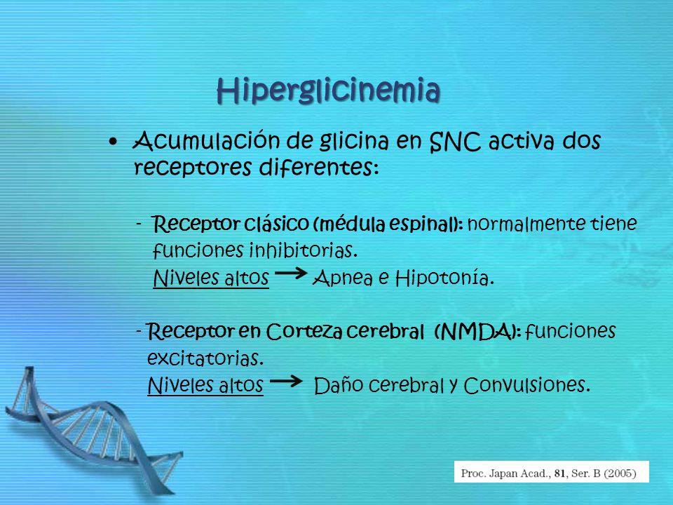 Hiperglicinemia Acumulación de glicina en SNC activa dos receptores diferentes: - Receptor clásico (médula espinal): normalmente tiene.