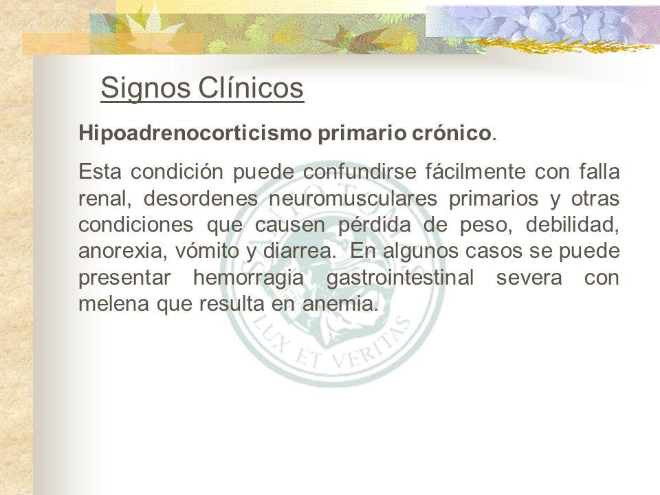 Signos Clínicos Hipoadrenocorticismo primario crónico.