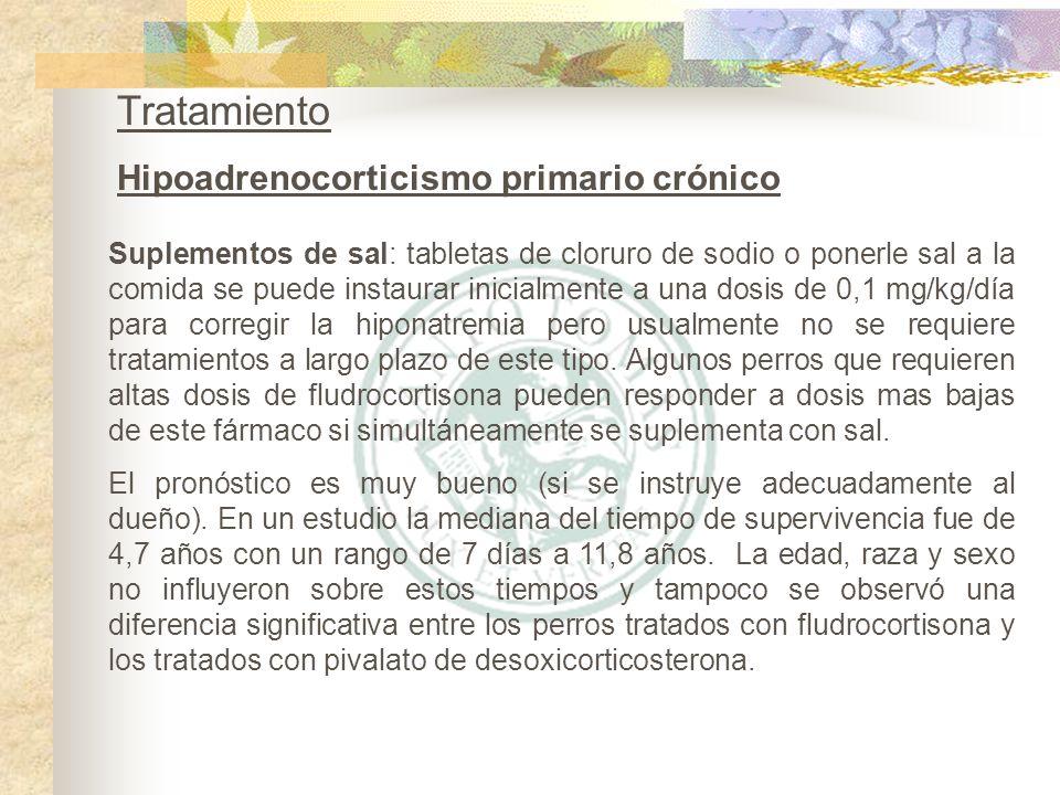 Tratamiento Hipoadrenocorticismo primario crónico
