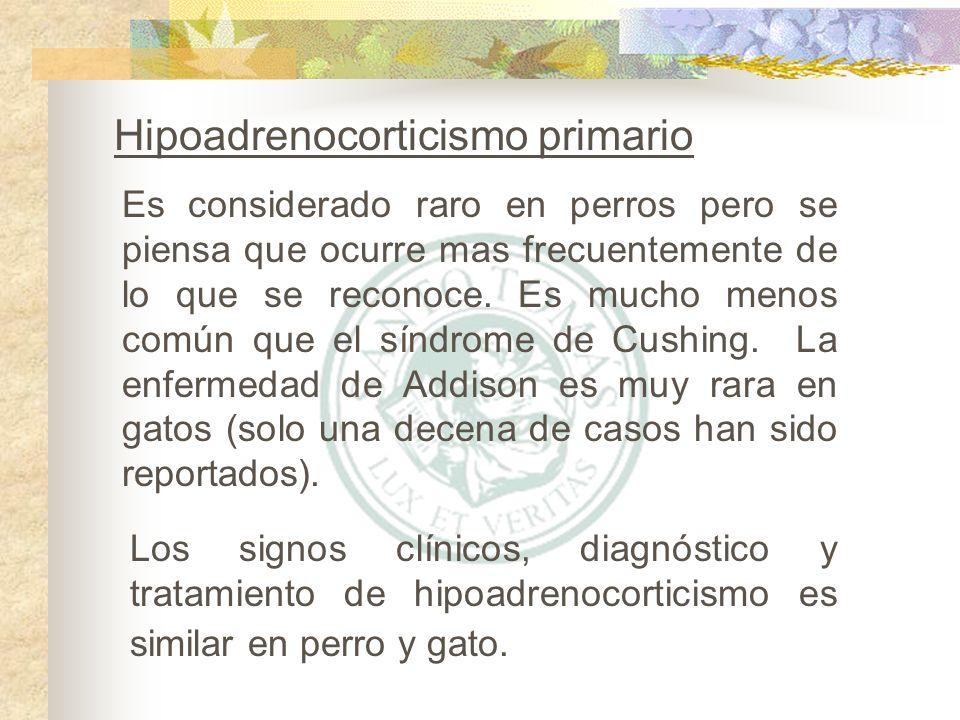 Hipoadrenocorticismo primario