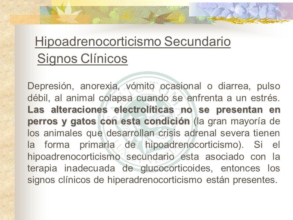Hipoadrenocorticismo Secundario Signos Clínicos