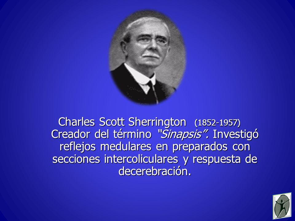 Charles Scott Sherrington (1852-1957) Creador del término Sinapsis