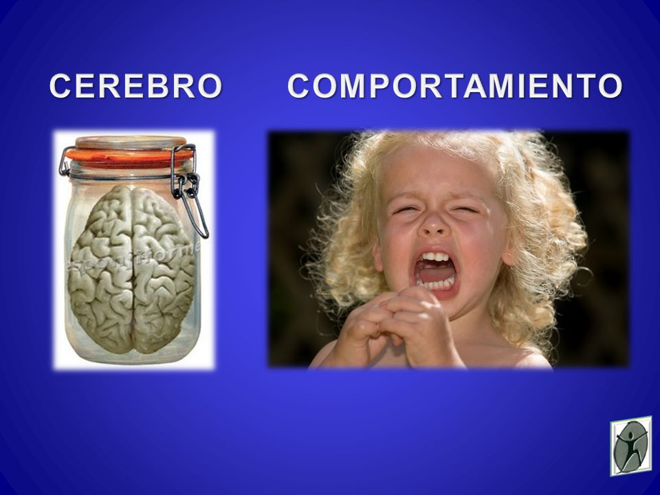 CEREBRO COMPORTAMIENTO