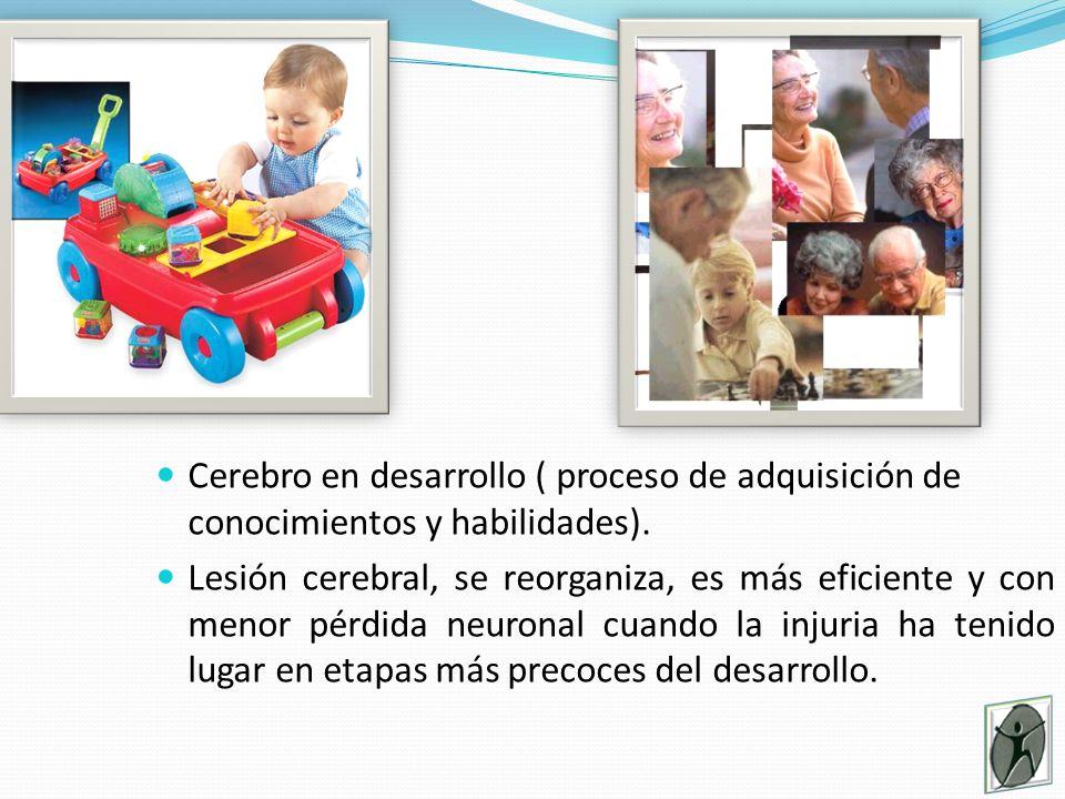 Cerebro en desarrollo ( proceso de adquisición de conocimientos y habilidades).