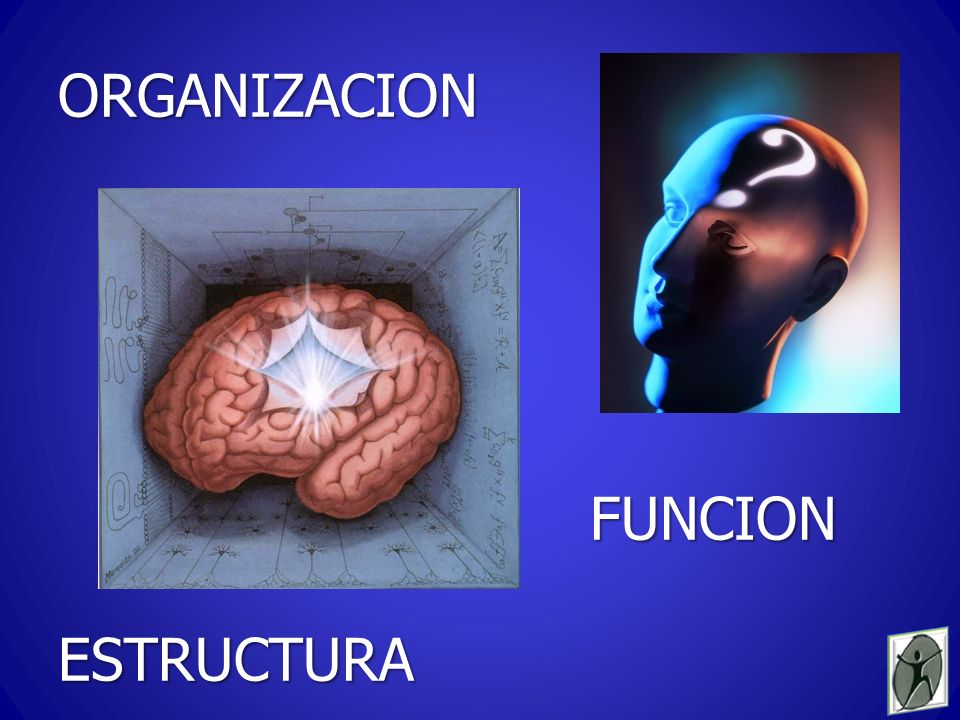 ORGANIZACION FUNCION ESTRUCTURA
