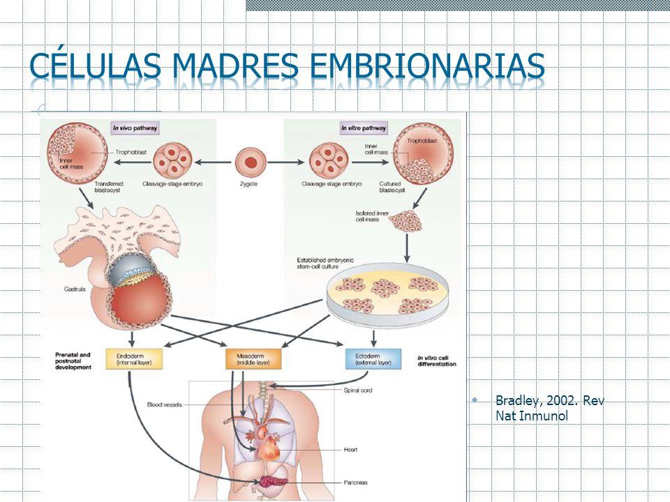 Células madres embrionarias