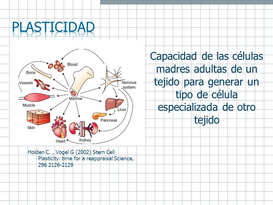 Plasticidad Capacidad de las células madres adultas de un tejido para generar un tipo de célula especializada de otro tejido.