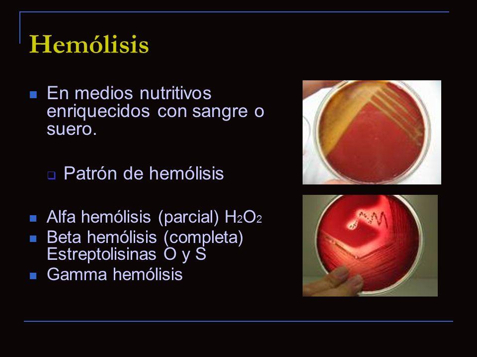 Hemólisis En medios nutritivos enriquecidos con sangre o suero.