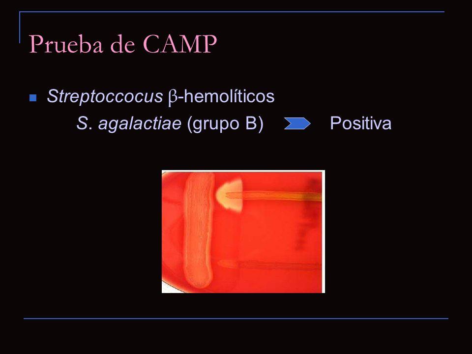 Prueba de CAMP Streptoccocus β-hemolíticos