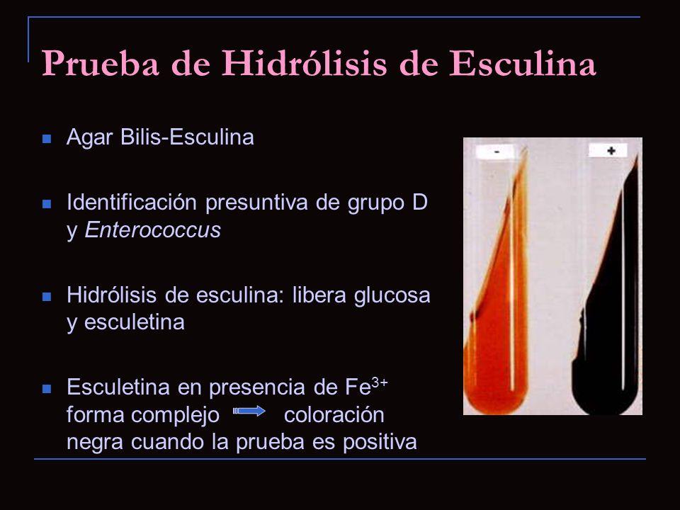 Prueba de Hidrólisis de Esculina