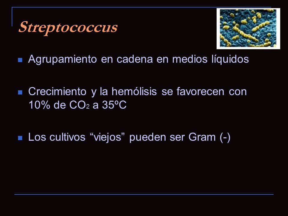 Streptococcus Agrupamiento en cadena en medios líquidos