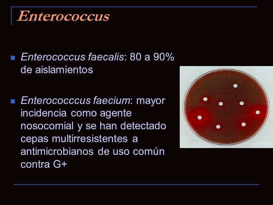 Enterococcus Enterococcus faecalis: 80 a 90% de aislamientos