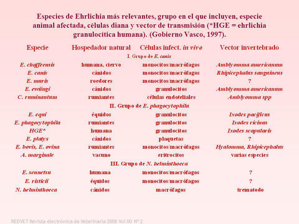 Especies de Ehrlichia más relevantes, grupo en el que incluyen, especie animal afectada, células diana y vector de transmisión (*HGE = ehrlichia granulocítica humana). (Gobierno Vasco, 1997).