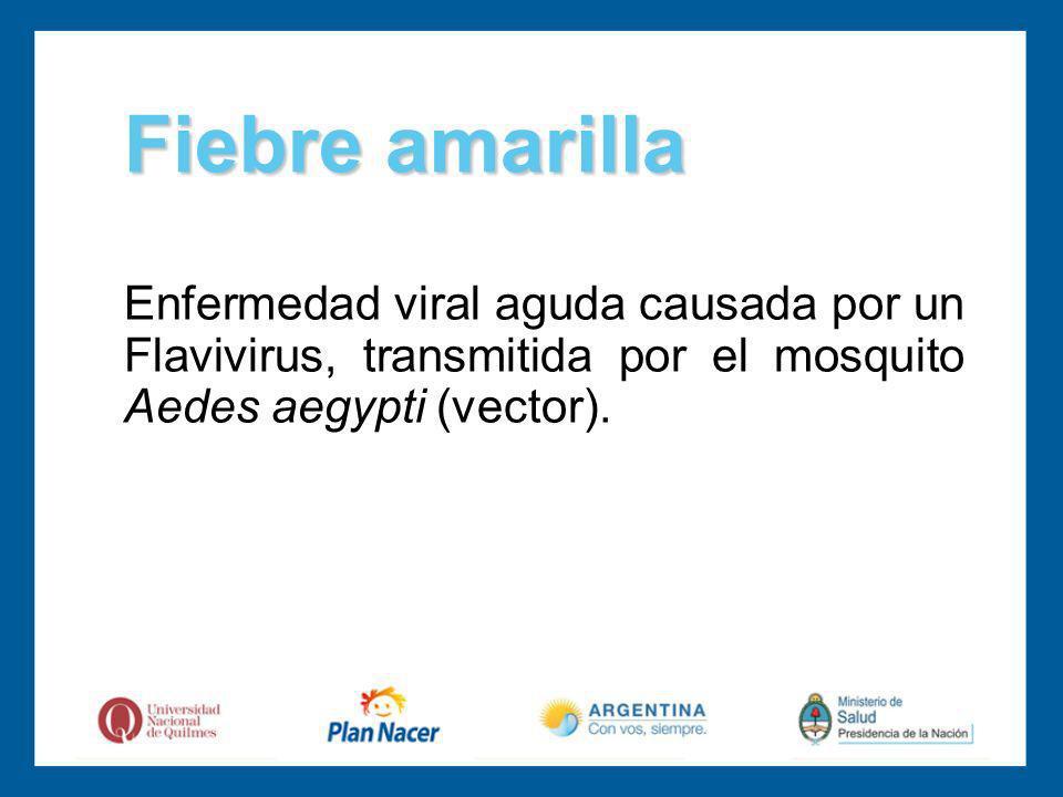 Fiebre amarilla Enfermedad viral aguda causada por un Flavivirus, transmitida por el mosquito Aedes aegypti (vector).