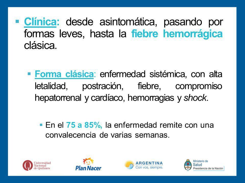 Clínica: desde asintomática, pasando por formas leves, hasta la fiebre hemorrágica clásica.