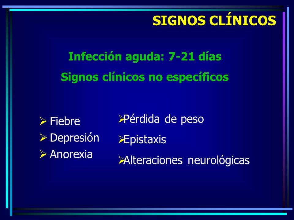 Infección aguda: 7-21 días Signos clínicos no específicos