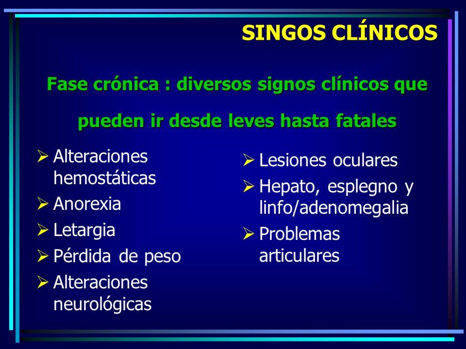 SINGOS CLÍNICOS Fase crónica : diversos signos clínicos que