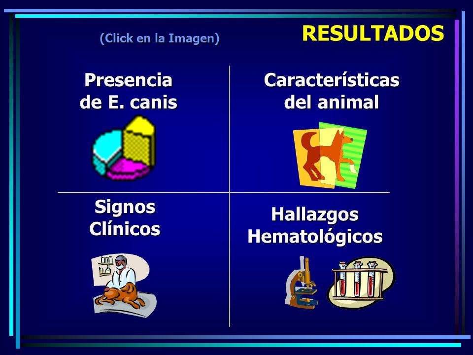 Características del animal Hallazgos Hematológicos