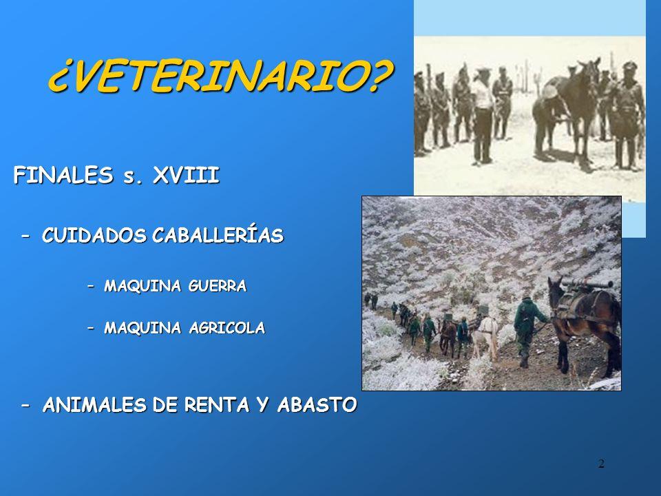 ¿VETERINARIO FINALES s. XVIII CUIDADOS CABALLERÍAS