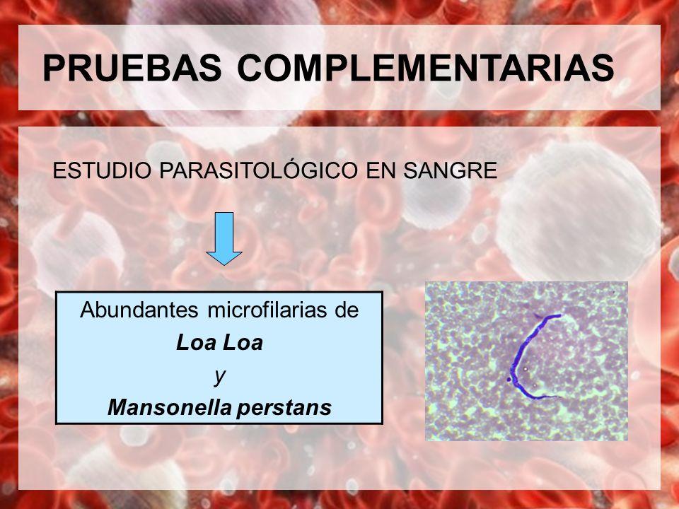Abundantes microfilarias de